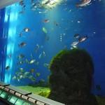 Casa de los Peces - Aquarium Finisterrae
